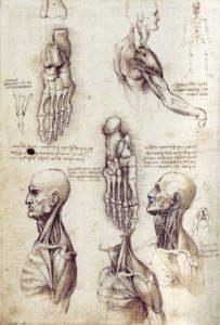 Études documentaires, Léonard de Vinci, vers 1510-1511, plume et encre, lavis, sur traces de pierre noire, 28,9 x 19,9 cm.